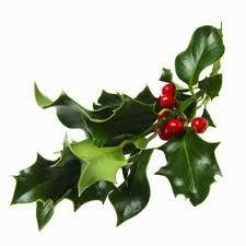 Mistletoe-L 2